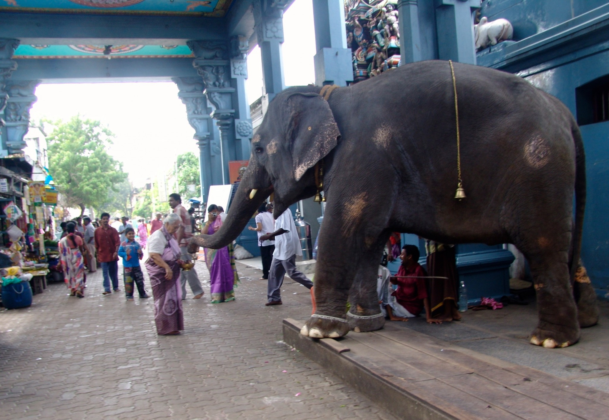 elephant giving a blessing in temple